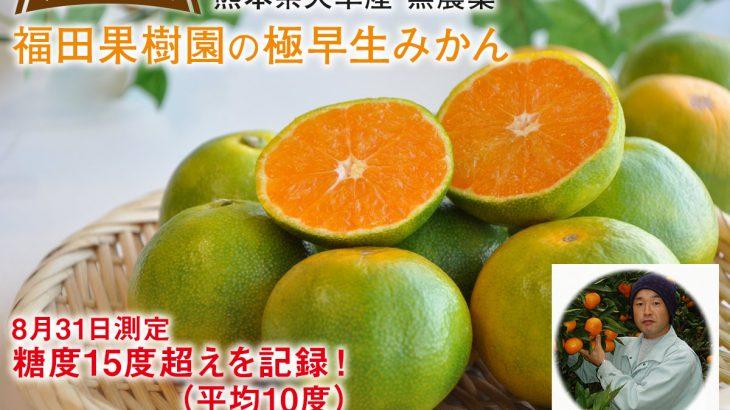 【今シーズン最後!!(の予定)】無農薬極早生みかん2kg