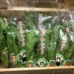 【送料無料】『熊本産』ほうれん草5袋(1,750円相当)