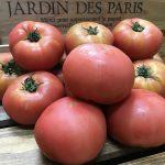【送料無料】『熊本産』トマト4kg(16玉)