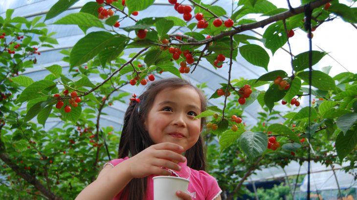 【限定プレゼントつき】熊本「奥あそフルーツガーデン」さんは果物狩りだけじゃない魅力がいっぱい!