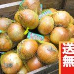 【送料無料】玉ねぎ(Lサイズ3玉(1kg)×3袋)