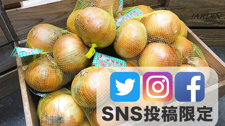 SNS投稿者限定!!【送料無料】玉ねぎ(Lサイズ3玉(1kg)×3袋)
