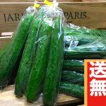 【送料無料】きゅうり3kg(500g入り×6袋もしくはバラ)