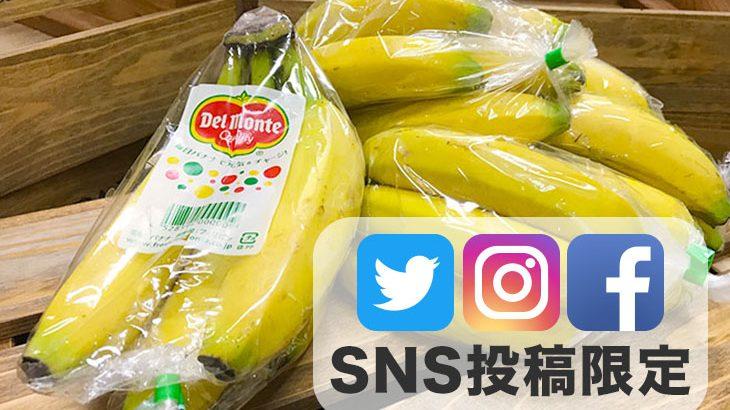 SNS投稿限定!!【送料無料】バナナ5房(1,800円相当)