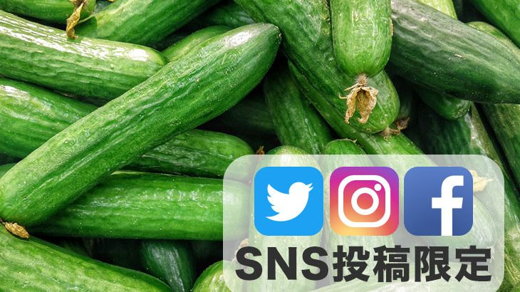 SNS投稿者限定!!【送料無料】きゅうり3kg(500g入り×6袋もしくはバラ)