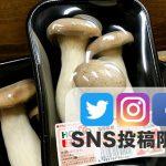 SNS投稿者限定!!【送料無料】歯ごたえ抜群『エリンギ10パック』