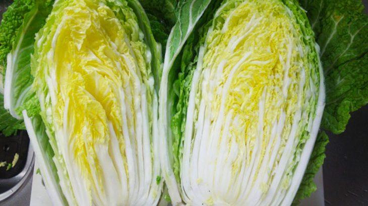 【3,500円以上相当】鍋野菜の王様『大玉の白菜6株』
