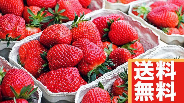 【送料無料】旬のフルーツ『いちご』4パック(4,000円相当)
