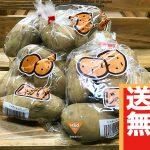 【送料無料】メークイン3kg(2,500円相当)