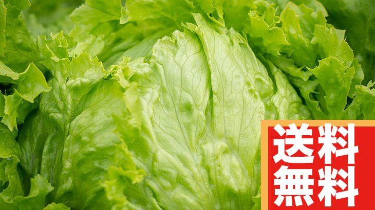 【送料無料】『熊本産』レタス8玉(3,000円相当)