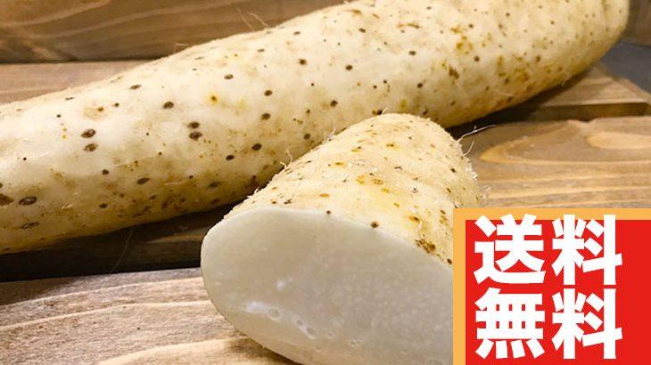 【送料無料】『青森産』長芋約2.5kg(2,800円相当)