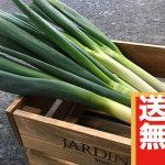 【送料無料】鍋にぴったり!大量『白ネギ12本』(3,000円相当)