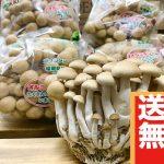 【送料無料】ぶなしめじ8袋(2,200円相当)
