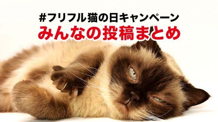 猫の日キャンペーン!みんなの投稿まとめ