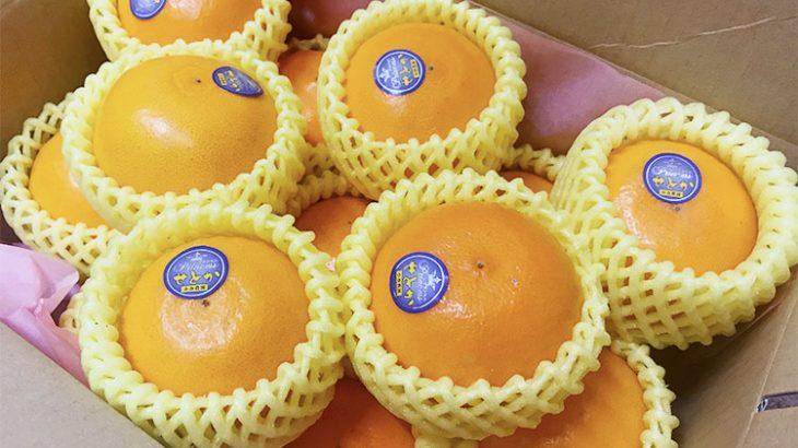 【究極の柑橘】「せとか」をお得に購入できるチャンス!