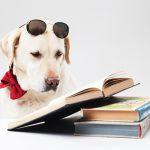 4月23日は「こども読書の日」!あなたのオススメの本を教えてね
