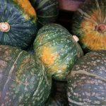 【3,500円以上相当】大玉の『かぼちゃ』6玉