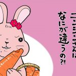 【マンガでわかる】熊本県まゆみ農園のニンジンの秘密に迫る!