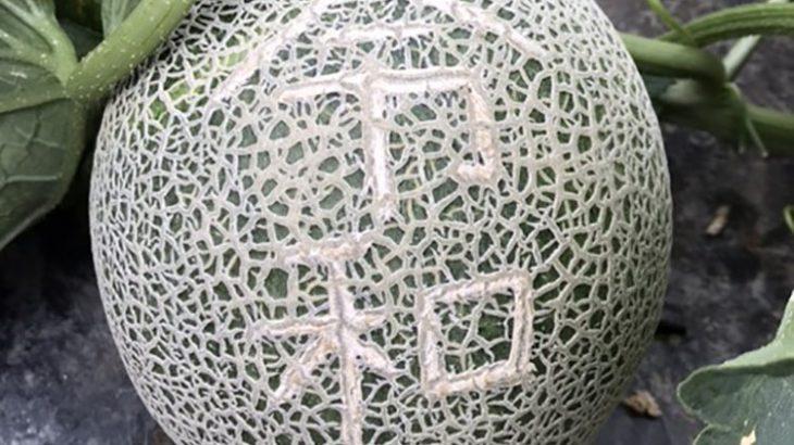 【令和記念】富良野メロンに文字入れした「令和メロン」を8玉のみ限定販売&1玉プレゼント!